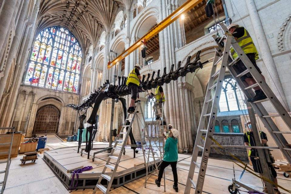 Building Dippy the dinosaur at Norwich Cathedral. Photograph: Norwich Cathedral/Bill Smith