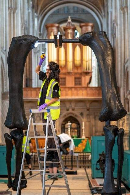 Building Dippy the dinosaur at Norwich Cathedral. Noemi Moran from the Natural History Museum examining the casting as it is erected. Photograph: Norwich Cathedral/Bill Smith