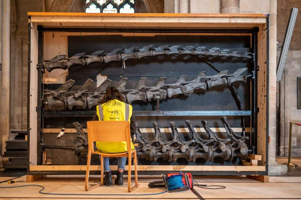 Building Dippy the dinosaur at Norwich Cathedral. Noemi Moran. Photograph: Norwich Cathedral/Bill Smith