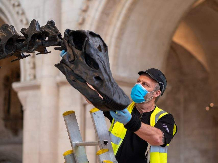Dippy the dinosaur press launch at Norwich Cathedral. Andy Wahl attached the skull. Photograph: Norwich Cathedral/Bill Smith