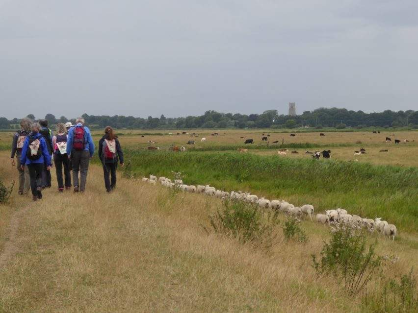 The pilgrims were even joined by some sheep!